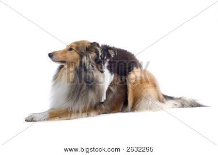 Two Adorable Shelton Dogs Having Fun