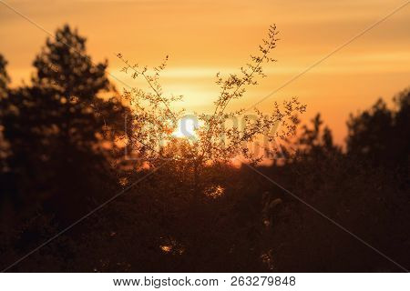 Nature Meadow Sunset. Bright Sunny Day In Meadow Background. Close Up Of Forest Flowers.herbs In Nat