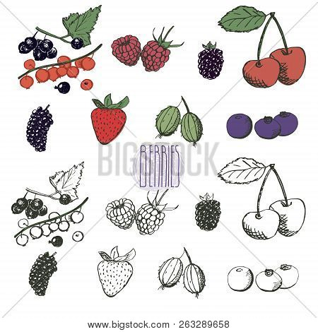 Berries Collection. Hand Drawn Set Of Berries In Vector. Vintage Berries Sketch. Currant, Raspberry,