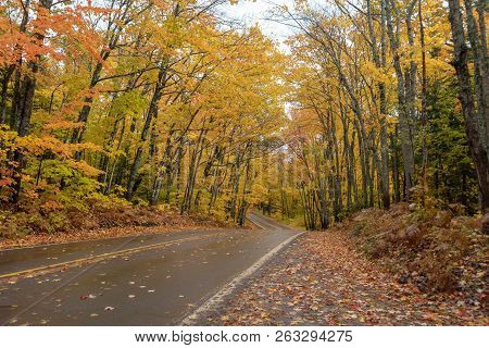 Beautiful Golden Autumn Trees Along A Road In Michigan