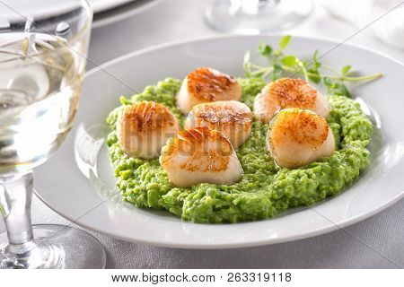 Delicious Pan Seared Scallops On Pureed Peas With Thyme.