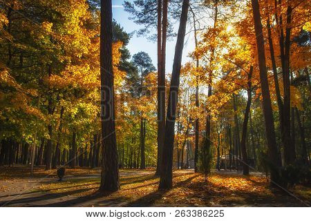 Autumnal Park. Fall. Colourful Autumn Nature In Sunny Park. Amazing Landscape With Bright Sunlight.