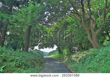 A Country Road Running Through Deciduous Forest