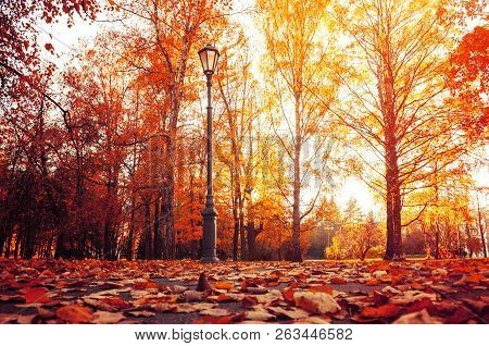 Autumn city landscape. Autumn trees in sunny autumn park lit by sunshine and fallen autumn maple leaves on the foreground. Autumn city park scene