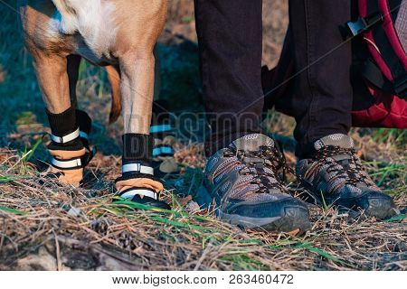Hiker And Dog In Hiking Shoes Stand Side By Side In The Forest. Legs And Paws Of Dog In Hiking Boots