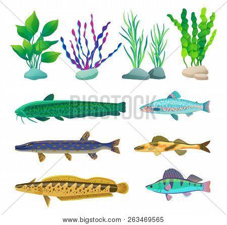 Various Algae Type, Predatory And Aquarium Fish Rare And Common Specie Variegation. Multicolored Mar