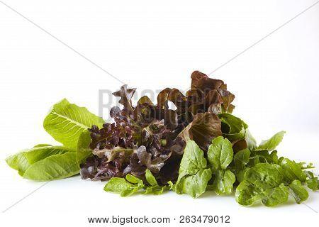 Salad Greens, Herbs. Healthy Eating.