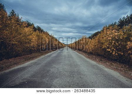Dark Autumn Road Dark Autumn Road Dark Autumn Road