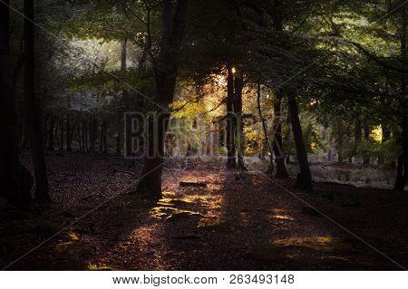 Landscape Image Of Morning Sunlight Shining Through Rural Woodland