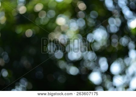 Background and bokeh. The images have beautiful lighting and circular blurred images suitable for the background. To shoot under a tree shade. Blurry images appear green and white reflecting a beautiful sphere.