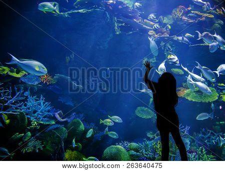 Underwater Aquarium With Fish And Coral Show Marine Life