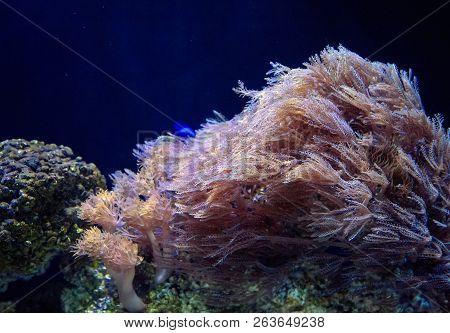 Watertree Flowing In Dark Water Aquarium.