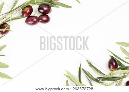 Olive Tree Twigs With Olives On White With Copy Space