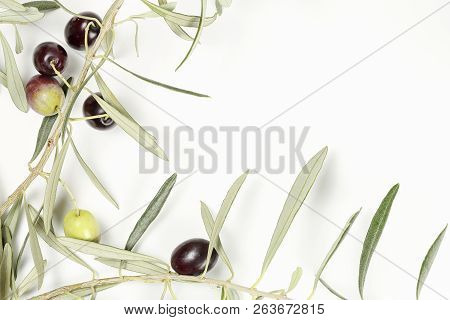 Olive Tree Twig With Olives On White With Copy Space