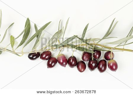 Olive Tree Twig With Olives On White Surface