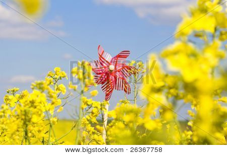 hand mill in a rapeseed field against blue sky