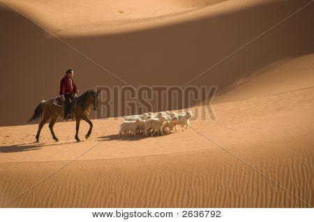Navajo Indian Herding His flock of sheep across the sand dunes. poster