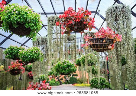 Varieties Of Blooming Colorful Plants And Flowers In Hanging Flower Pot In Tropical Ornamental Indoo