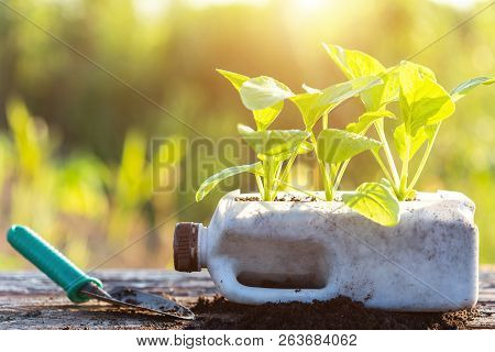 Plastic Recycle Concept : People Planting Vegetable In Plastic Bottle And Pile Of Soil On Wooden Tab