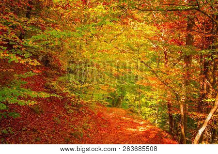 Autumn In Cozia, Carpathian Mountains, Romania. Vivid Fall Colours In Forest. Scenery Of Nature With