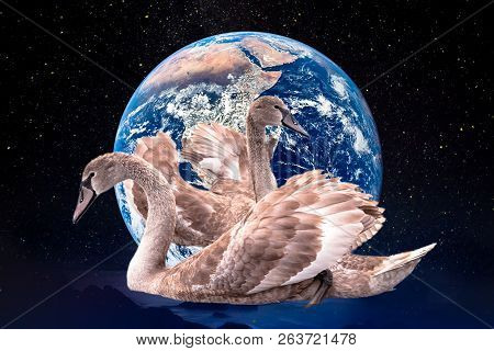 Two Young Swans With Broun Feathers Dancing In The Background Of Planet Earth And Galaxy Stars. Save