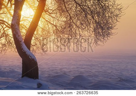Winter Sunlight In Evening At Sunset Through Tree Branches. Winter Landscape. Yellow Sunshine. Snow