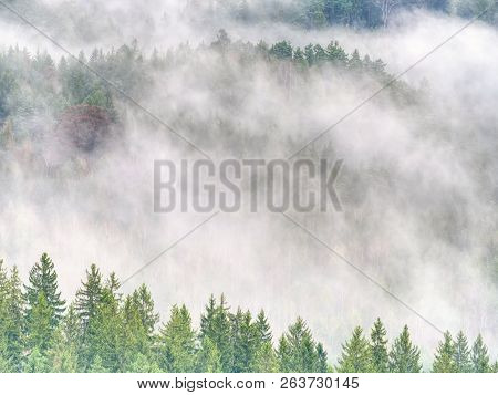 Autumnal Landscape With Foggy Forest, Green Needles And Leaves At Cloudy Sunrise. Fairy Misty Forest