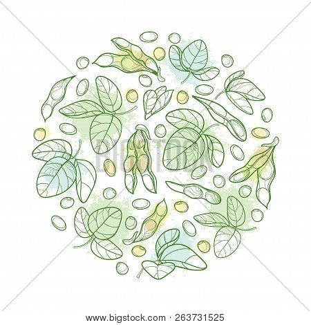 Vector Round Bunch With Outline Soybean Or Soy Bean Pod With Beans And Ornate Leaf In Pastel Green I