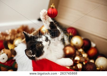Cute Kitty Playing With Red And Gold Baubles In Box, Ornaments And Santa Hat Under Christmas Tree In