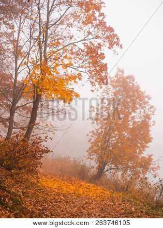 Autumn Misty Landscape In The Park. Misty Forest