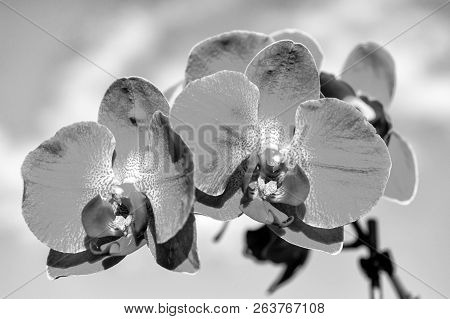 Blossoming Orchid With Pink Petals On Sunny Day. Flower With Fresh Blossom On Blue Sky. Beauty Of Na