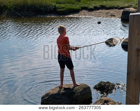 Great Summer Activity - Boy With A Scoop Net By The Water Cathing Crabs And Sea Creatures