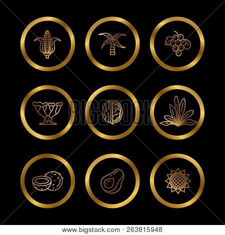 Gold Icons Of Natural Oil Ingredients. Line Eco Products Icons For Food And Cosmetics Industry. Vect