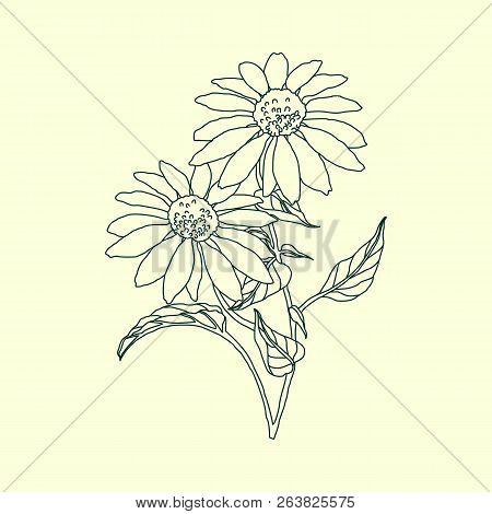 Graphical Black Flower Illustration. Black Flower, Contour Flower, Bloom Flower, Decorative Flower,