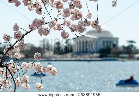 Intentional Blurred Background Of The Jefferson Memorial On The Washington Dc Tidal Basin. Focus On
