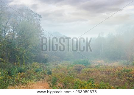 Overcast Sky Over The Park Meadow In Fog. Gloomy Autumn Scenery