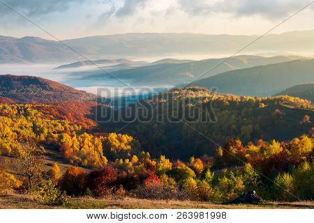 Beautiful Foggy Autumn Landscape. Trees In Fall Color On A Sunny Morning In Mountains