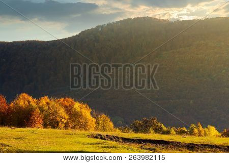 Forest With Orange Foliage On A Grassy Meadow In Mountains At Sunrise In Autumn