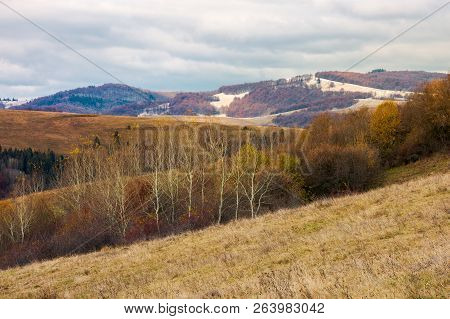 Lovely Landscape In Mountains. Row Of Naked Trees On A Hill With Weathered Grass. Overcast Sky Above