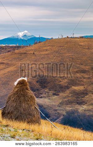 Haystack On A Step Slope. Mountain With Snowy Peak In The Distance. Gloomy Late Autumn In Mountainou