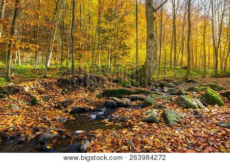 Brook Among The Trees. Fallen Foliage Among The Rocks. Beautiful Autumn Scenery