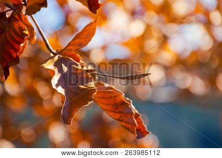Brown Foliage On The Branch In Sunlight. Lovely Autumn Background With Bokeh Effect