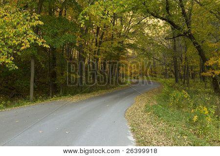 Road In Woods Autumn