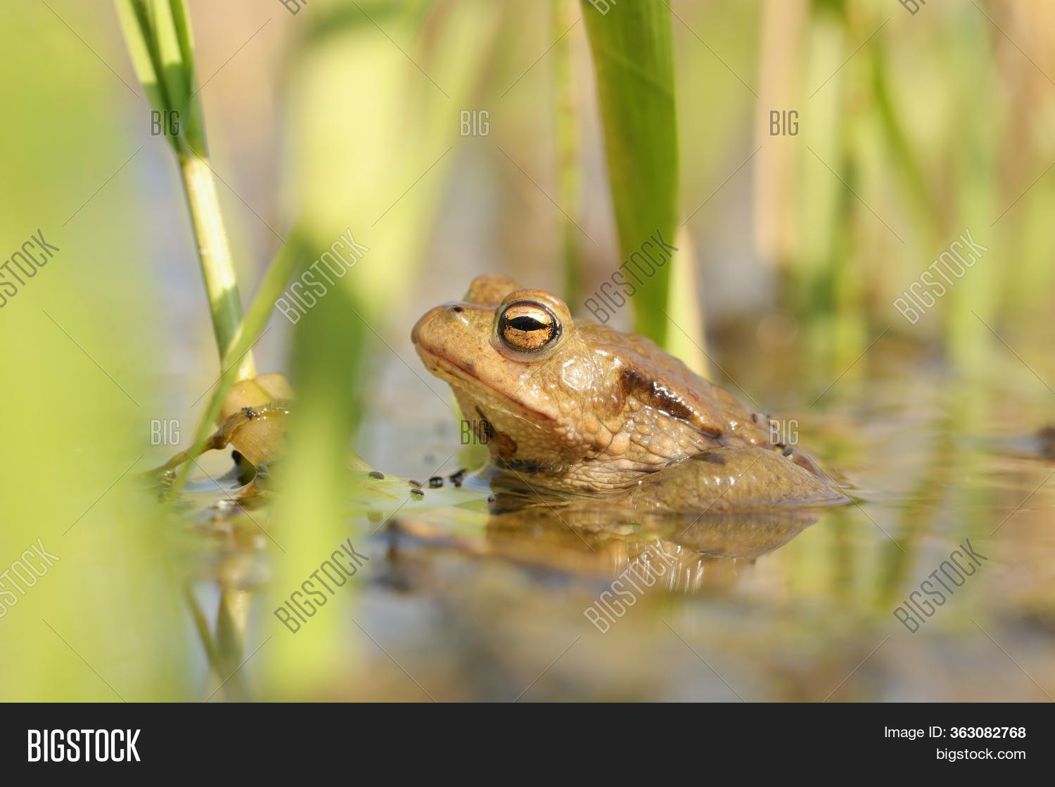 Frog in forest pond water mating season sunny spring Nature background Nature background Frogs toad Natural environment Nature background macro Nature closeup Nature background outdoor vibrant scenic Nature background Nature background Nature background.