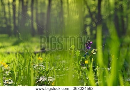 Beautiful Green Background With Forest. Spring Nature With Trees. Colorful Background.