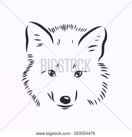 Hand Drawn Fox, Vector Illustration. See Also Other Sets Of Animals. Wild Fox Vector Illustration. W