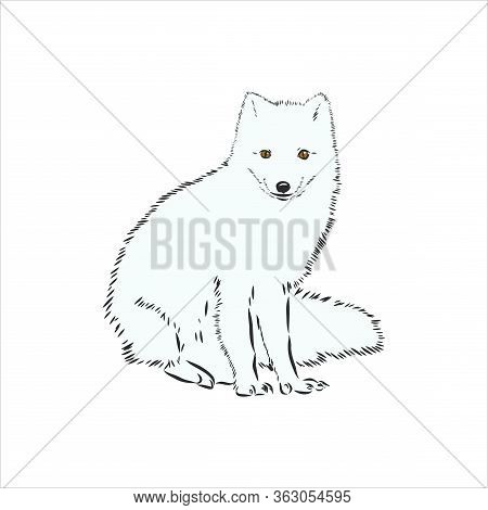Vector Illustrated Portrait Of Arctic Fox. Cute White Fluffy Face Of Polar Fox On Blue Background. A