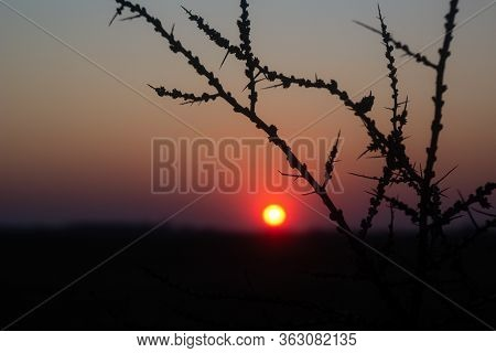 Spiny Branch And Red Sunset. Dark Background