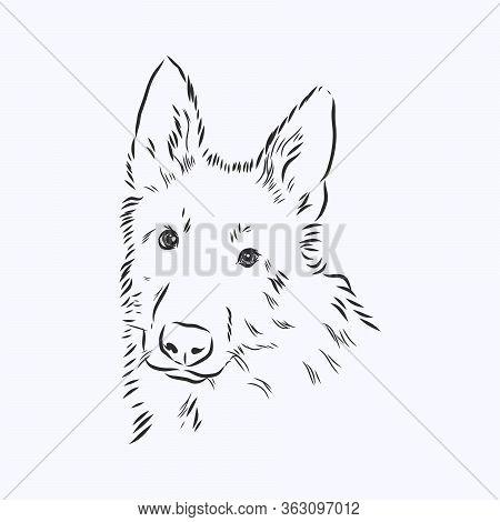 German Shepard Vector Illustration, Portrait Sketch In Black Lines. Dog Head Portrait Of A Sheepdog