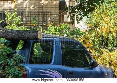 Kyiv Ukraine - August 13 2019: A Very Large Broken Tree Fell On A Car During A Hurricane. Destructio